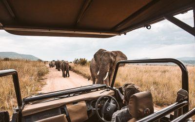 Experience It: Hwange National Park