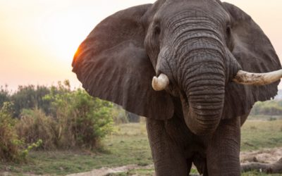 Experience It – Chobe National Park