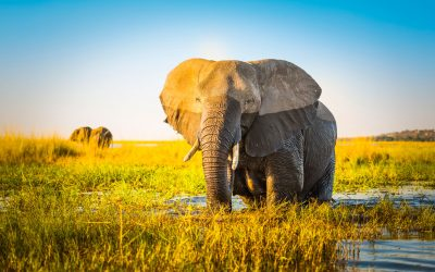 Okavango Delta ranks 4th in Lonely Planet ultimate travel destinations list