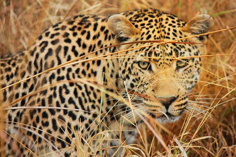 Experience It – The Story Behind Moremi Game Reserve, Botswana