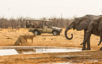 Experience It – Savuti, Botswana: Wild & Unpredictable