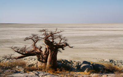 Experience It – Makgadikgadi Pans National Park: Salt Pans & Kalahari Desert