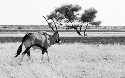 Experience It – Central Kalahari Game Reserve: Legendary Animals of Botswana