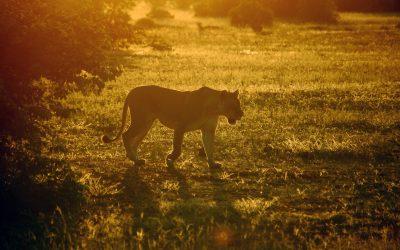 Experience It – Tuli Block, Botswana: The Land of Giants