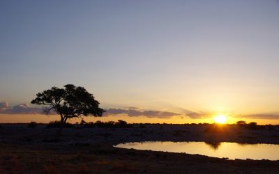Experience It: Etosha National Park: All You Need to Know