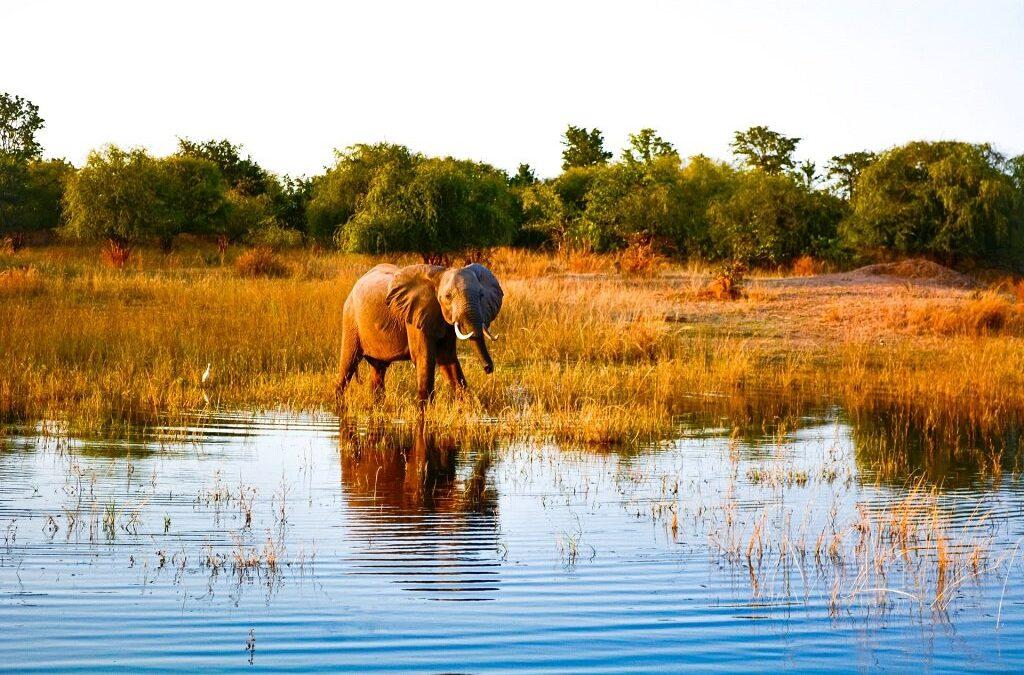 Experience It: Lake Kariba, Zimbabwe: Unique Safaris & Tiger Fishing Thrills