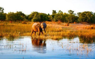 Lake Kariba, Zimbabwe: Unique Safaris & Tiger Fishing Thrills