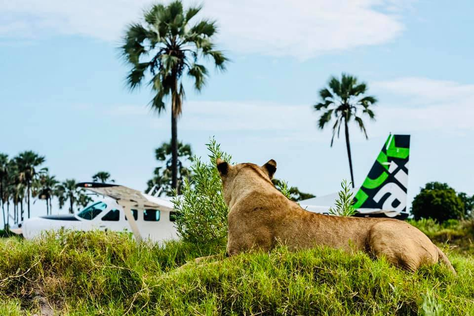 Experience It: Mack Air's Insider Guide to Adrenaline in Africa